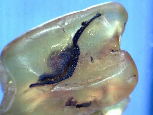 leaf-in-amber